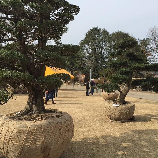 庭師さん達が丹精込めて育てられた 樹木。